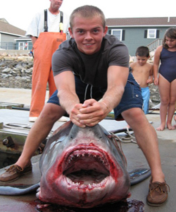 State Record Shark