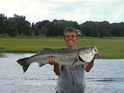 Big Striped Bass in MA